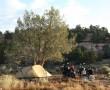 Camp Nephi Pasture Road