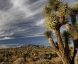 Joshua Tree Road, Mojave Desert, Utah