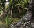 Die Tempel  mitten im Dschungel