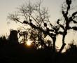 Sonnenuntergang in Tikal