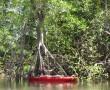 Kanuausflug in Mangrovenwald El Esteron