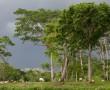 Dschungel am Ufer