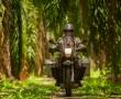 Abstecher in die Palmenplantage