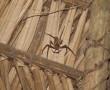 In der Lodge unterm Dach - Spinne mit Eiern