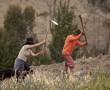 Feldarbeit, ecuadorianische Andenregion