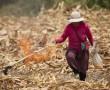 Feldarbeit in Peru